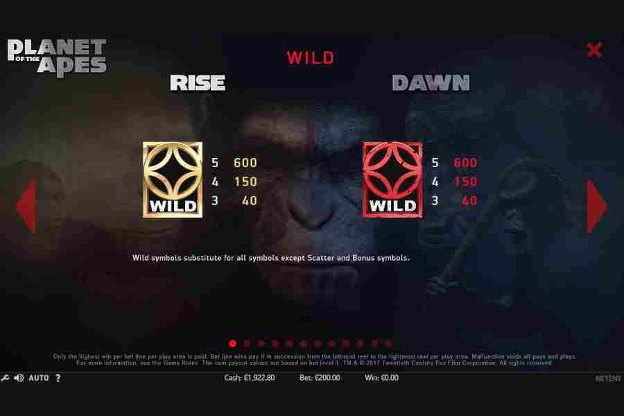 Wild Rise Dawn